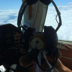 copilot bear