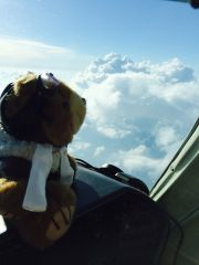 CoPilot Bear Spies the Cell Easily From Altitude