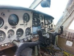 rotting mooney 021