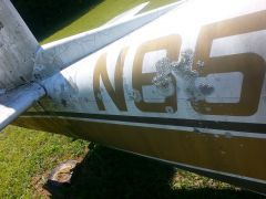 rotting mooney 023