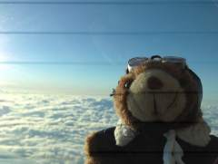 Good times for co-Pilot Bear