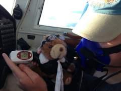 Bear's Oxygen Sat